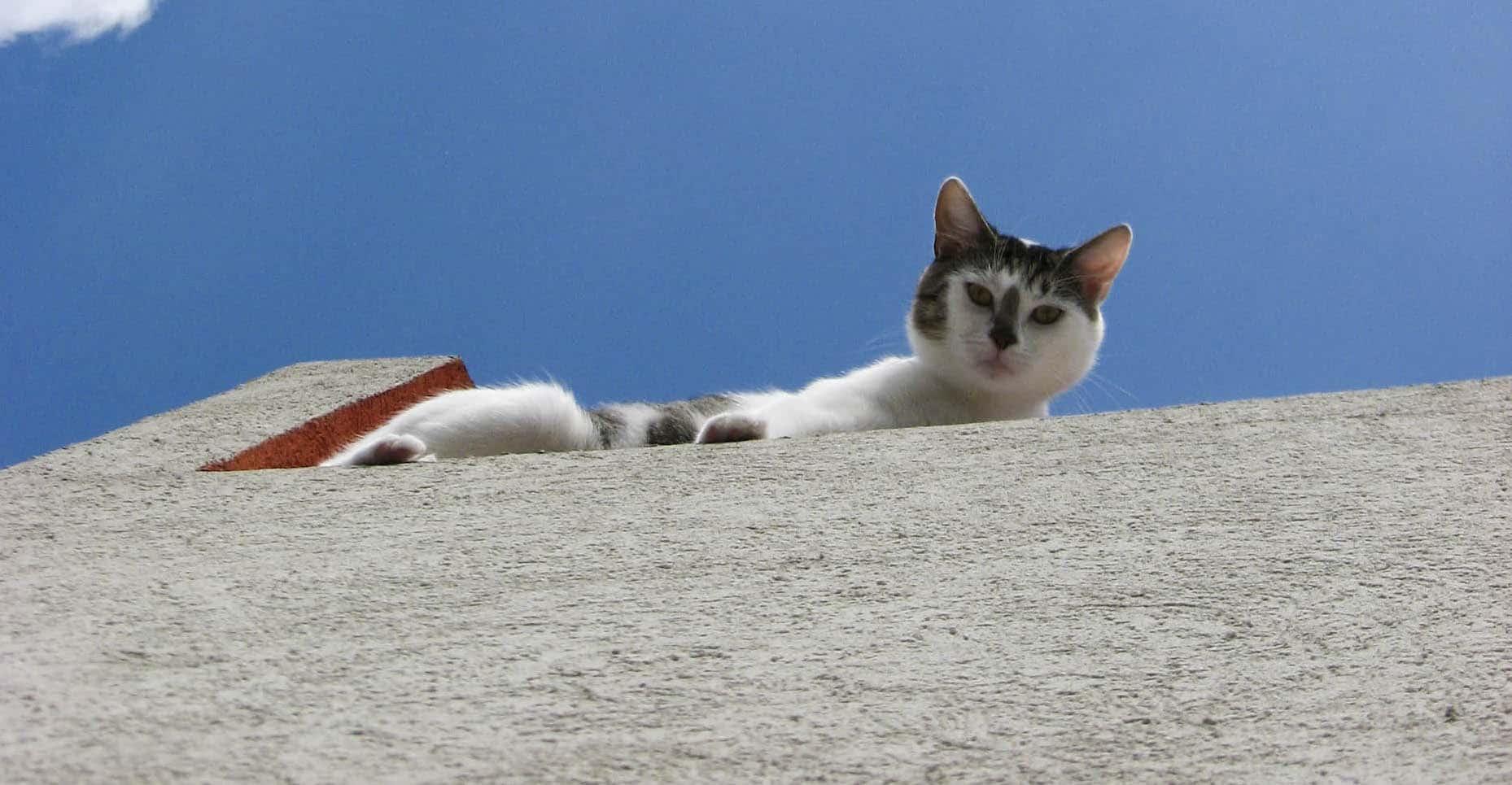 Herbata i koty. Herbaciarnia z kotami w Japonii