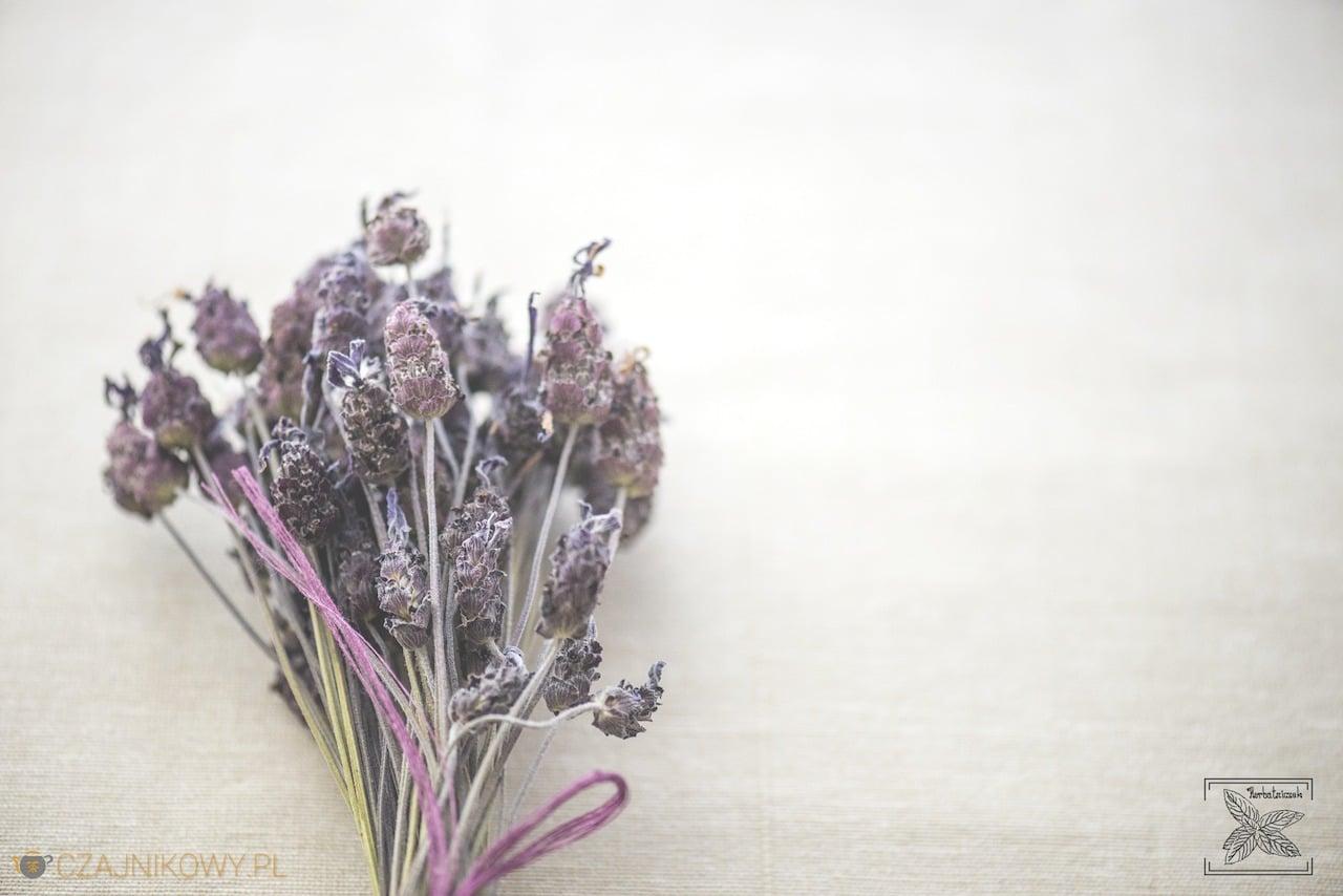 Lawenda. Napar z lawendy. Przepis na lemoniadę z lawendy: kwiaty lawendy francuskiej