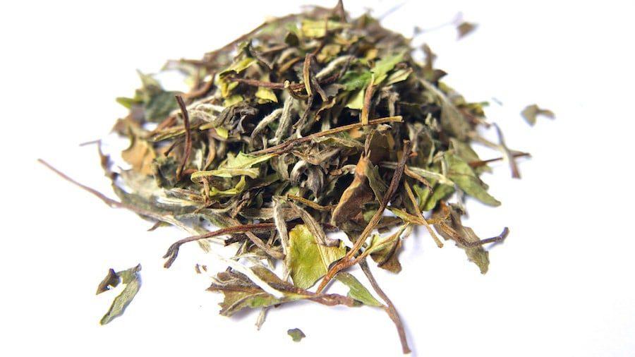 Herbata biała Pai Mu Tan, produkcja