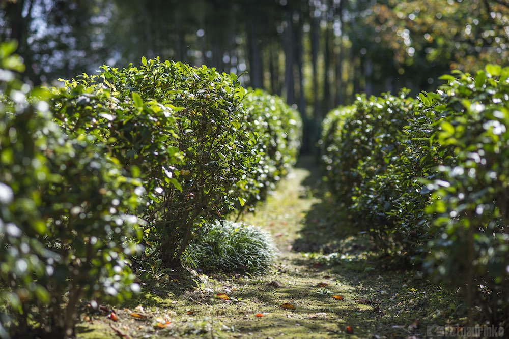 Herbata w Hiroszimie