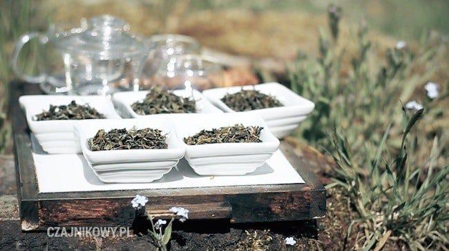 Świeża herbata z prowincji Darjeeling. Herbata Darjeeling