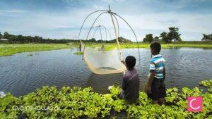 NASA w służbie ogrodów herbacianych w Assam