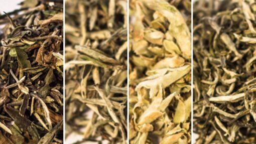 Zestaw biała herbata poznaj smaki białej herbaty