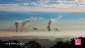 Jak radzić sobie ze smogiem? Herbata na smog