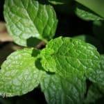 Herbata marokańska przepis na parzenie, pochodzenie