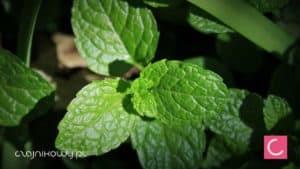 Herbata marokańska przepis, pochodzenie