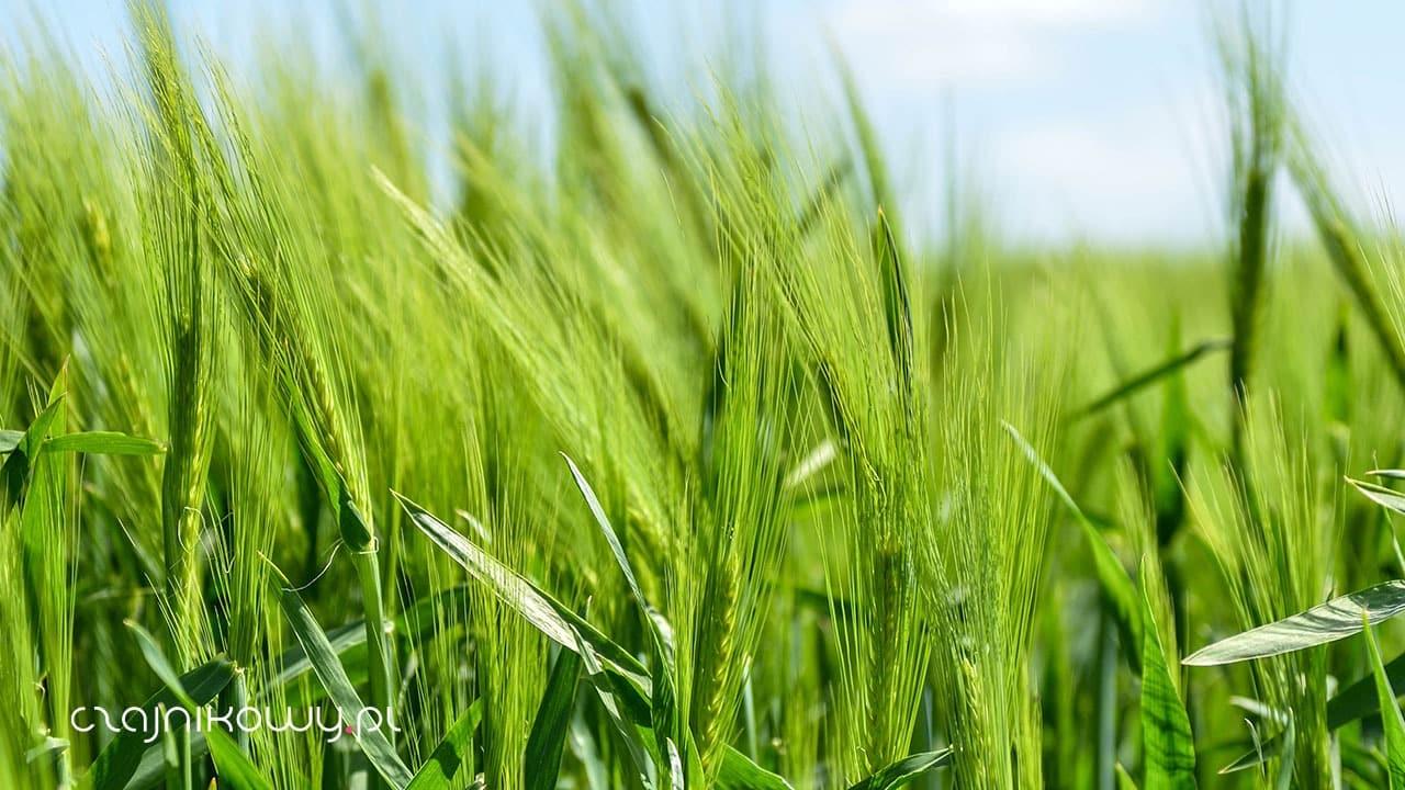 Herbata organiczna, bio, ekologiczna (eco) i fair trade: co oznaczają te słowa i certyfikaty?