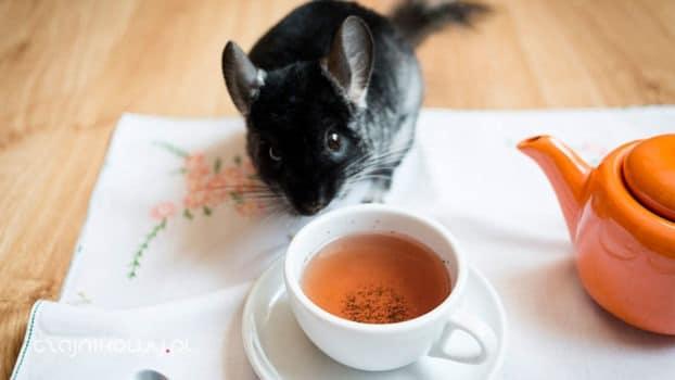 Herbata na śniadanie. Herbata śniadaniowa, opinie