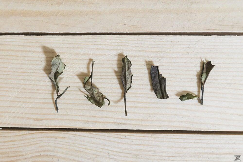 Biała herbata z Malawi - Malawi Thyolo Peony: liście herbaty