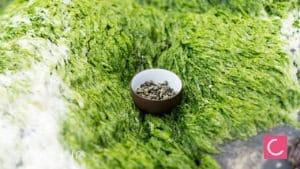 Herbata Sumatra Highland Chin Chin oolong w terenie