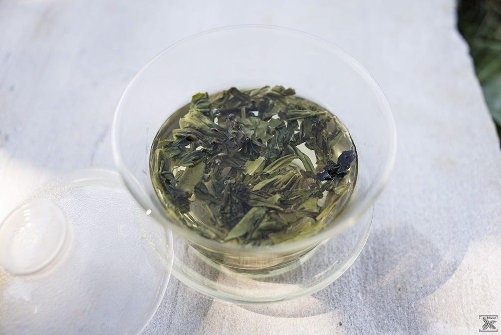 Organiczna zielona herbata LungChing: liście podczas parzenia
