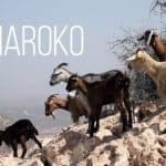 W poszukiwaniu herbaty: Maroko