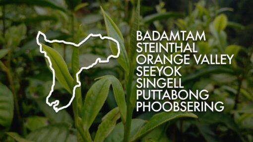 Zestaw herbat z 7 ogrodów Darjeeling 2018