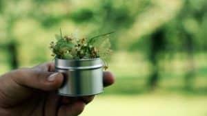 Herbata z lipy. Kwiat lipy: właściwości, działanie, jak parzyć?
