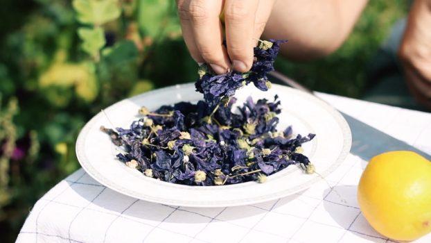 Niebieska herbatka ze Ślazu Dzikiego