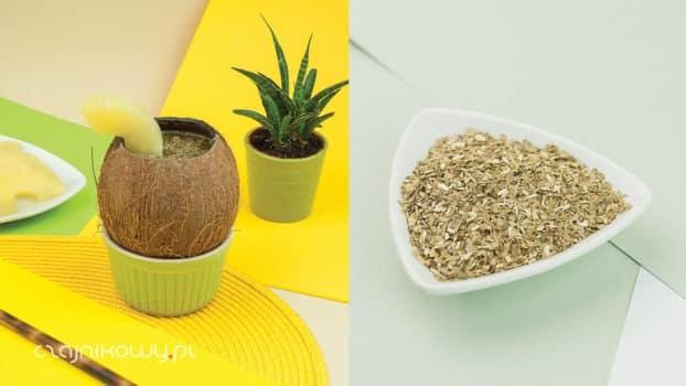 Jak zrobić yerba mate w kokosie? Przepis