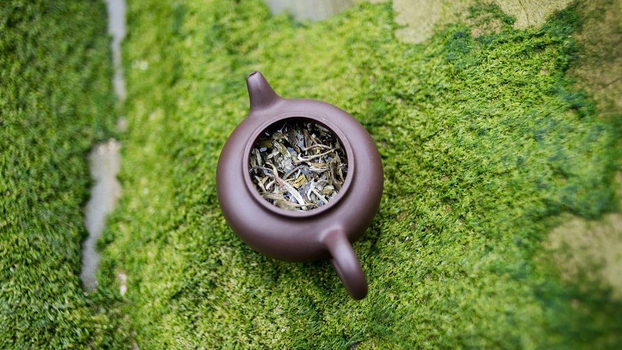 Biała herbata Snow Buds Leopard Premium parzona na zimno