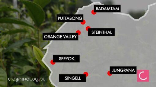 Zestaw herbata świeży zbiór 7x Darjeeling 2019