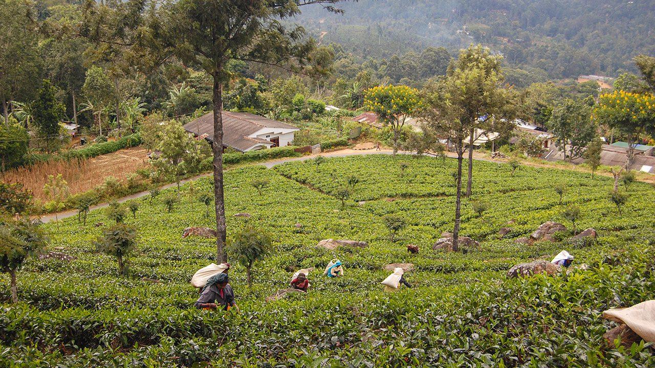 Trendy w herbacie 2019 (fot. Artur Kowalski)