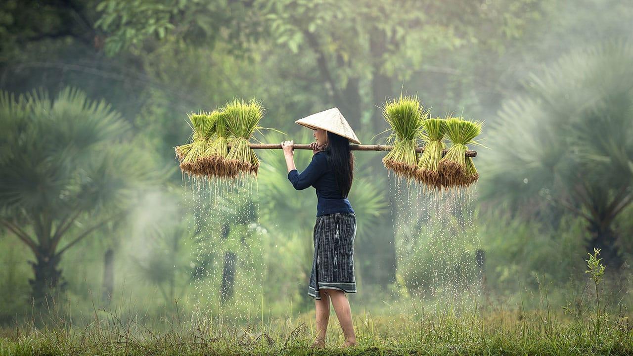 Wietnamska herbata