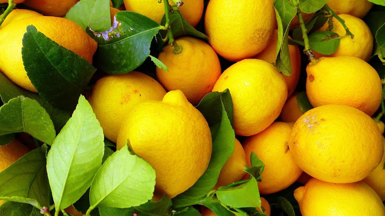 Kiszone cytryny do herbaty, przepis